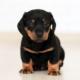 pup winking
